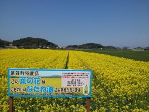 遠賀町の菜種油