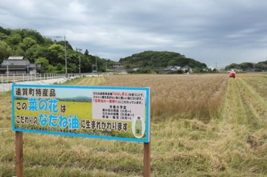 遠賀町のななしきぶの畑