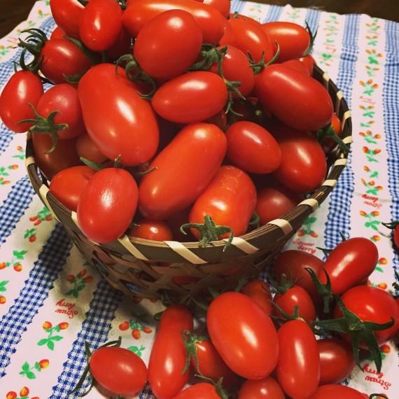 お客様からいただいたおいしそうなトマト