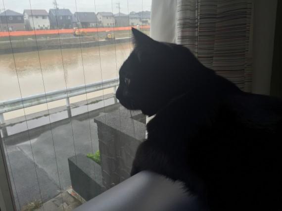 今朝も川守り中です