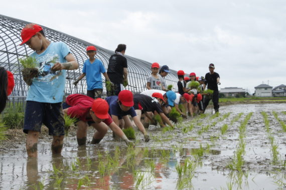 遠賀町の田植えの体験学習