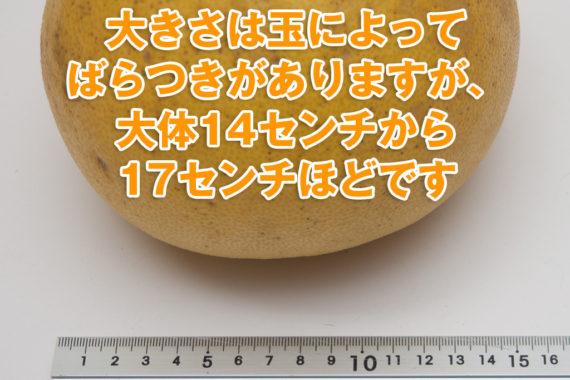阿久根ボンタンの直径の表示
