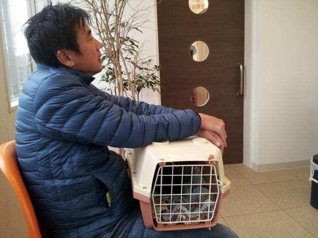 避妊手術で動物病院へ