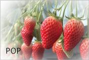 農産物販売促進ポップ